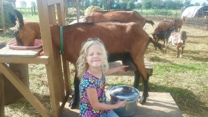 Adelle, the precocious 5-year-old who will also tend our ducks.
