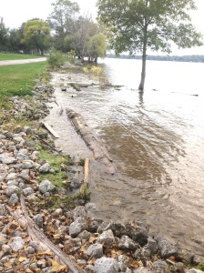 A few logs and debris have floated to shore from the recent rains.