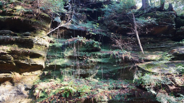 This dark sandstone exhibits a character similar to Pictured Rocks, Michigan